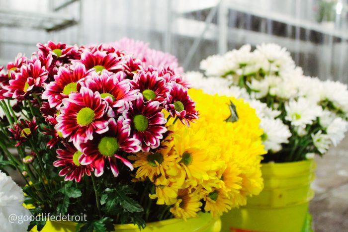 Jay's Flower Shop and Wholesale, 10500 Mack Avenue, Detroit
