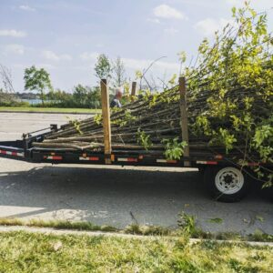 Photo of trees being brought to Eliza Howell Park.